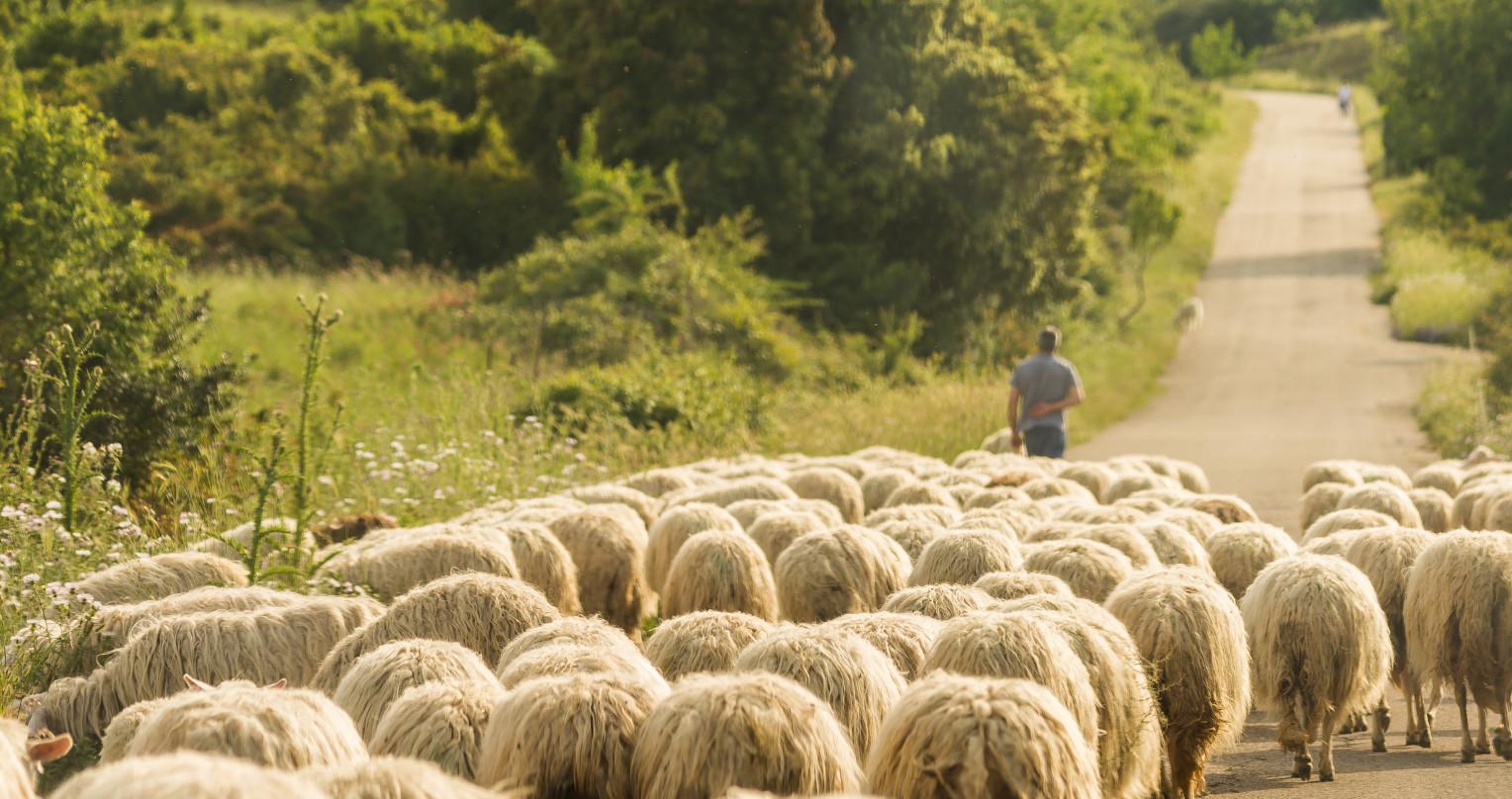 Progetti con cui collaboriamo: SheepToShip LIFE